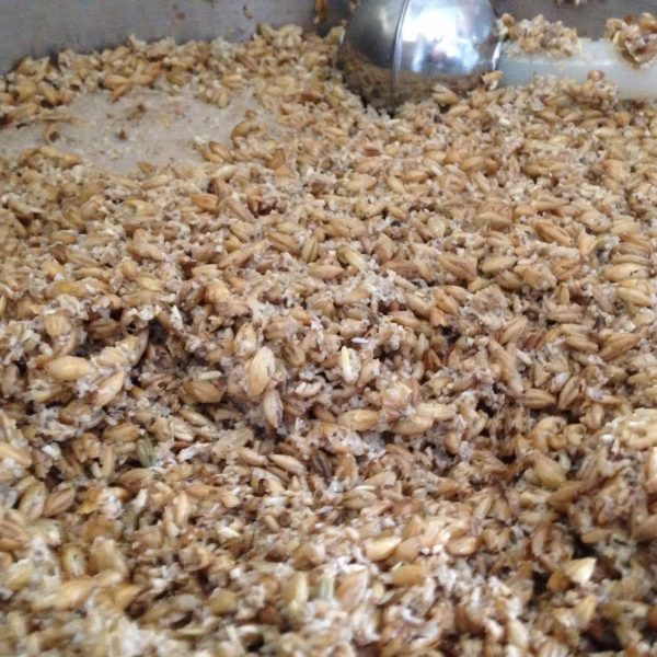 Here's a shot after the mash has been drained. It really shows just how intact the grain husks remain, and also how well crushed and separated the endosperm is.